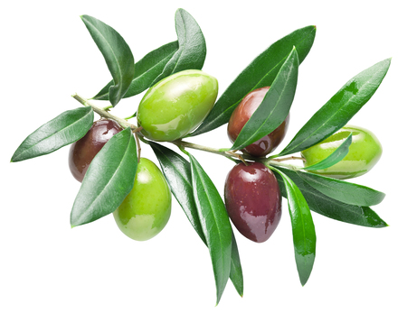Half-ripe fresh olive berry on the olive branch. File contains clipping paths. Banco de Imagens