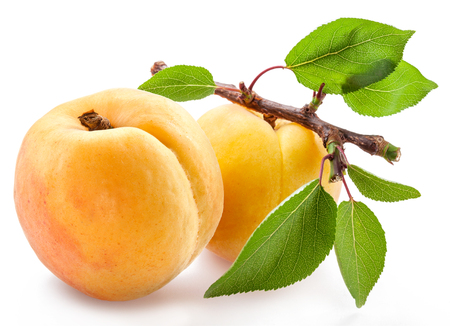 Ripe apricots on a small branch on white Stock Photo