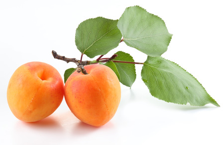 Ripe apricot on the branch and one apricot near isolated on white Stock Photo