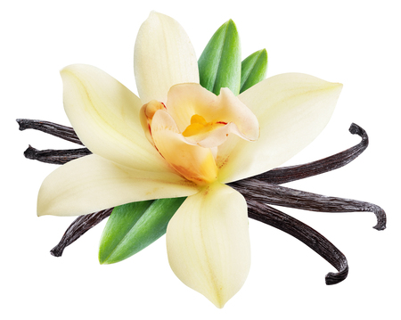 Dried vanilla sticks and orchid vanilla flower. File contains clipping path. 免版税图像
