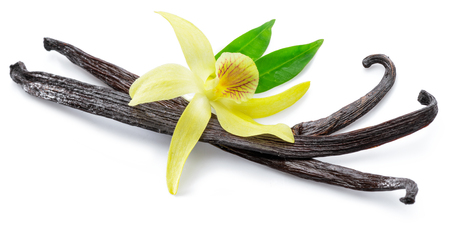 Dried vanilla stick and orchid vanilla flower isolated on white background.
