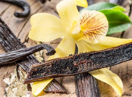 Dried vanilla stick and vanilla orchid on wooden table. Close-up.