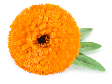 Calendula flower on the white background. 免版税图像