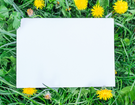 Paper blank on the green grass and dandelions. Green grass as a frame. 写真素材