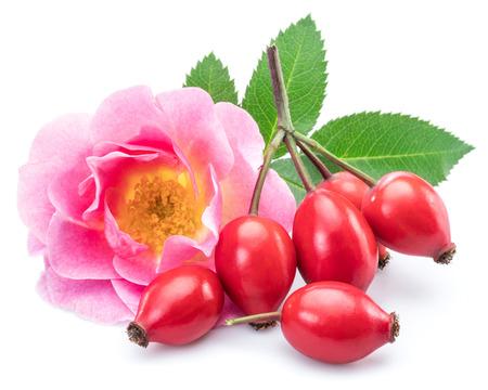 Cinorrodi con fiore di rosa canina isolato su un bianco