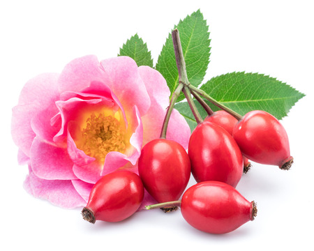 Rose-hips with rose hip flower isolated on a white