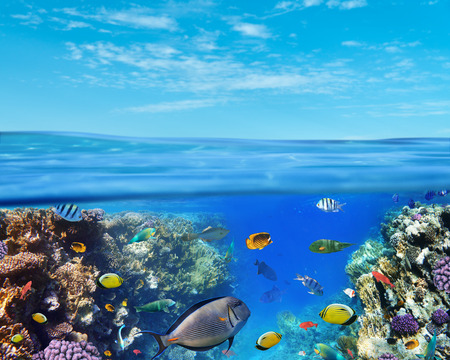 Underwater marine life of the Red Sea and blue sky. Colorful coral reef fishes and reefs. Zdjęcie Seryjne