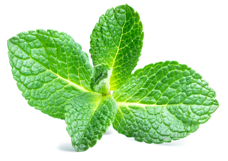Fresh mint leaves isolated on white background. 写真素材