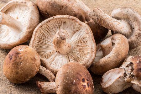 Shiitake mushrooms on the wooden
