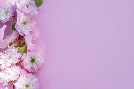 Violettes Papier leer und schöne Blumen der Mandelpflanze darauf. Standard-Bild