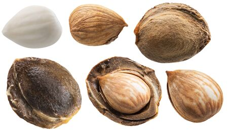 Set of apricot stones and apricot kernels. Clipping paths for each item.