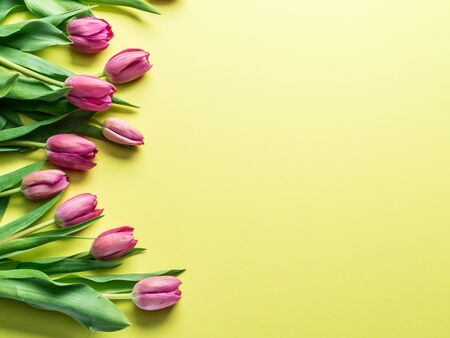 Delicate fresh tulips on yellow background. Top view.