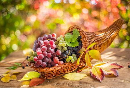 Autumn still life with ripe different grape varieties. Behind the beautiful autumn bokeh.