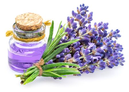 Bunch of lavandula and lavender essential oil isolated on white background.