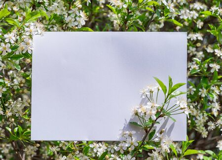 White paper blank between cherry branches in blossom. Banco de Imagens