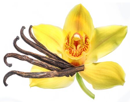Dried vanilla fruits and orchid vanilla flower isolated on white background. 写真素材
