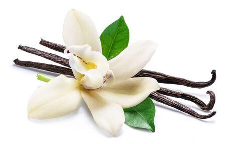 Palitos de vainilla secos y flor de vainilla orquídea aislado sobre fondo blanco.