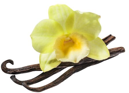 Dried vanilla fruits and orchid vanilla flower isolated on white