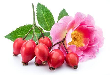 Hagebutten mit Rosenblüte auf einem weißen Hintergrund.