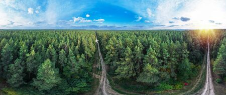 Picturesque and vivid view of evergreen pine forest and blue sky with white clouds. Nature background.