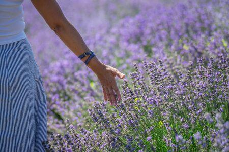Woman walking in the flowering lavender field.