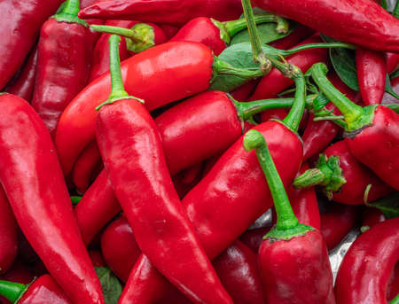 Lot of fresh red chili peppers.
