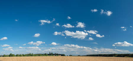 Panoramic view of wheat field and blue sky