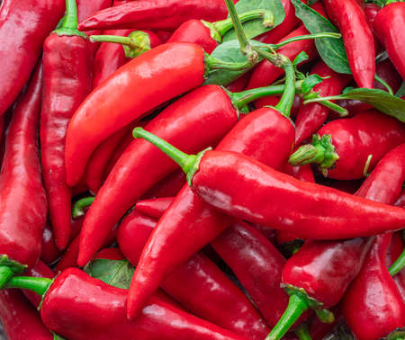 Lot of fresh red chilli peppers. Food background.