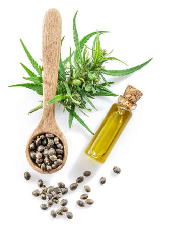 Cannabis seeds in the wooden spoon and hemp oil isolated on white background. Close up. Фото со стока