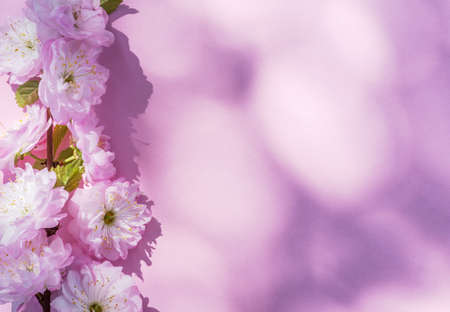 Violet paper blank and beautiful flowers of almond plant on it.