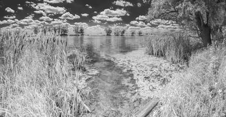 Near infrared photography of beautiful river bank covered with tall reeds and cloudy summer sky. Picture was taken with infrared-pass filter. Фото со стока