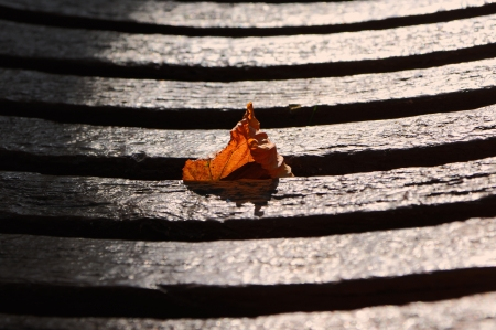 Autumn dry leaf got stuck in a park bench