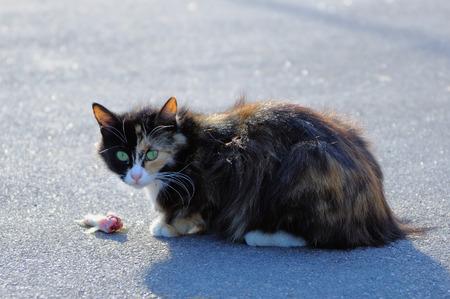 vagrant: Vagrant cat sitting next to half-eaten fish in the street Stock Photo