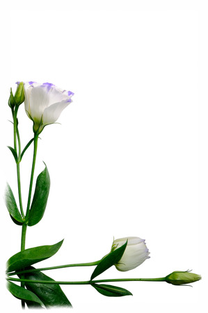 Two flowers are arranged on a white , with white borders