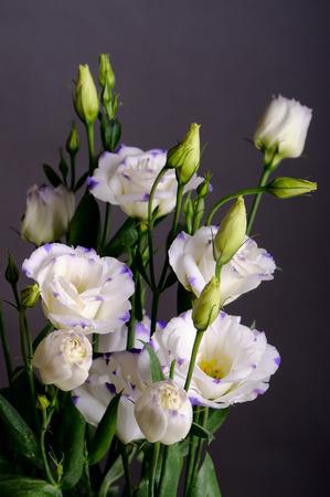 Eustoma flowers on gray background Stock Photo