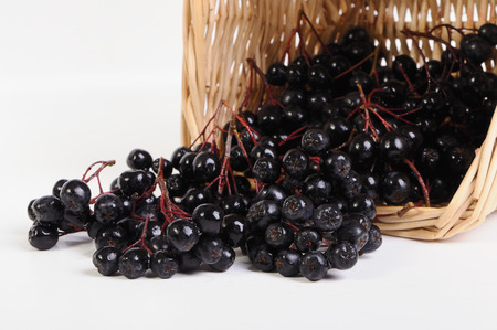 Fruits chokeberry in the basket on a white background Stock Photo