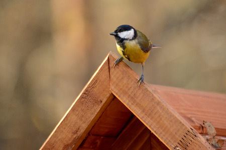 Titmouse sits on a wooden roof of a feeding trough Stockfoto