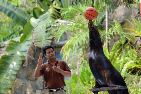 Kuala Lumpur, Malaysia - November 4, 2014: Trainer performs with fur seal in the zoo Kuala Lumpur