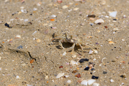 Crab sitting on the beach sand