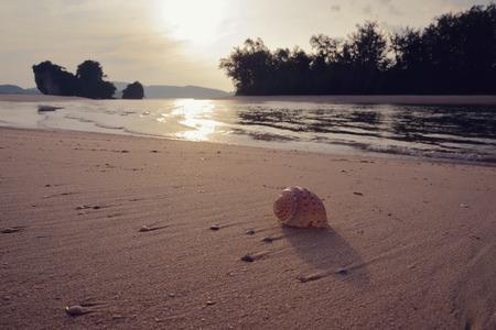 Shell lies on the sandy beach