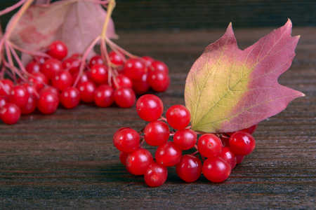 guelder rose berry: Guelder-rose berries on wooden table