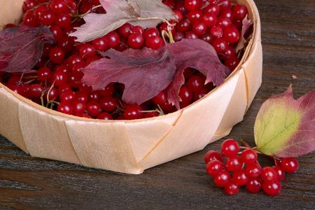 guelderrose: Guelder-rose berries on wooden table