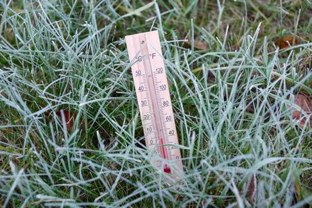 termómetro: Termómetro está en la hierba verde cubierto de escarcha y muestra la temperatura bajo cero