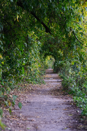 Old path in the deserted park