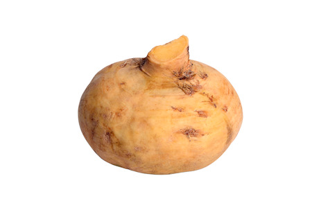 Turnip isolated on white