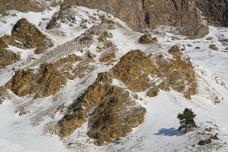 Lone pine tree on a rocky mountain slope covered with snow