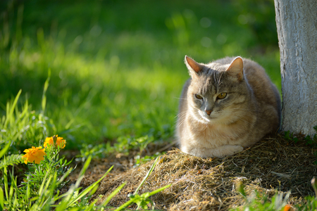 Domestic cat in the garden under a tree next to flowers
