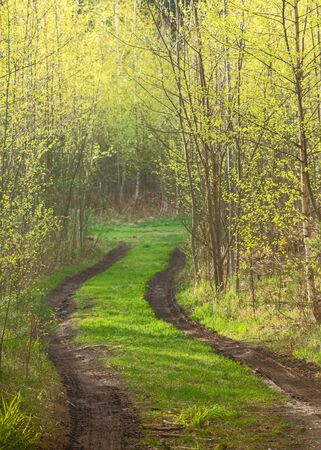 Forest path with spring mud among trees with young foliage Archivio Fotografico