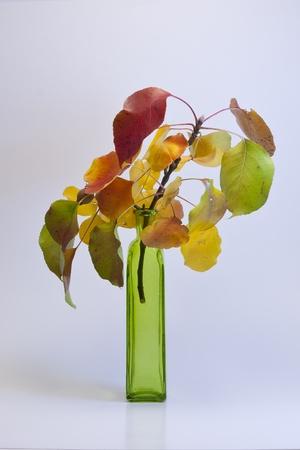 Autumn bouquet in vase on white background. photo
