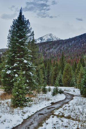 First snow in the Rocky mountains forest. Colorado, USA photo
